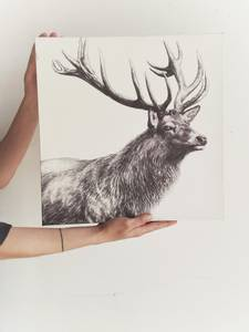 Bilde av Hvit - Hjort Lerretsbilde
